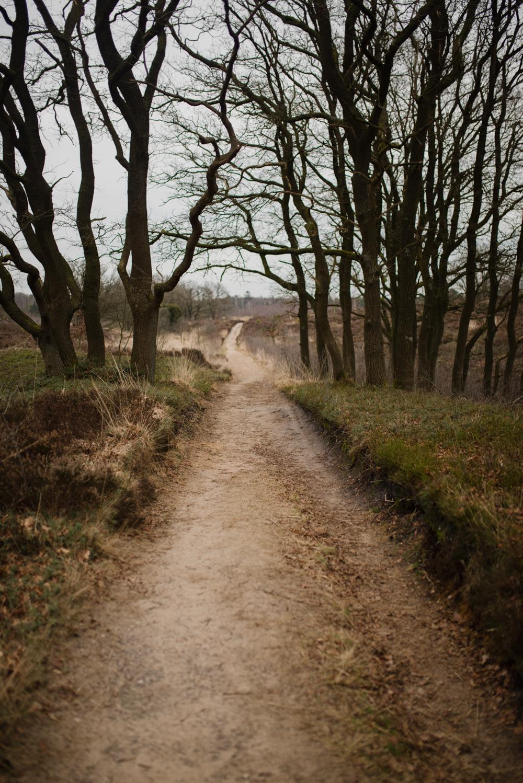 Wandelen op de Sallandse Heuvelrug (4 van 11)